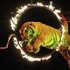 Цирки в Кировске