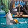 Дельфинарии, океанариумы в Кировске